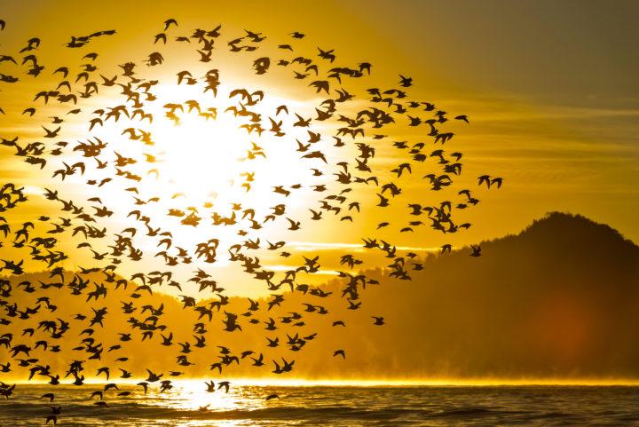 Mass Bird Suicide